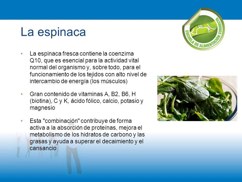 La espinaca La espinaca fresca contiene la coenzima Q10, que es esencial para la actividad vital normal del organismo y, sobre todo, para el funcionam
