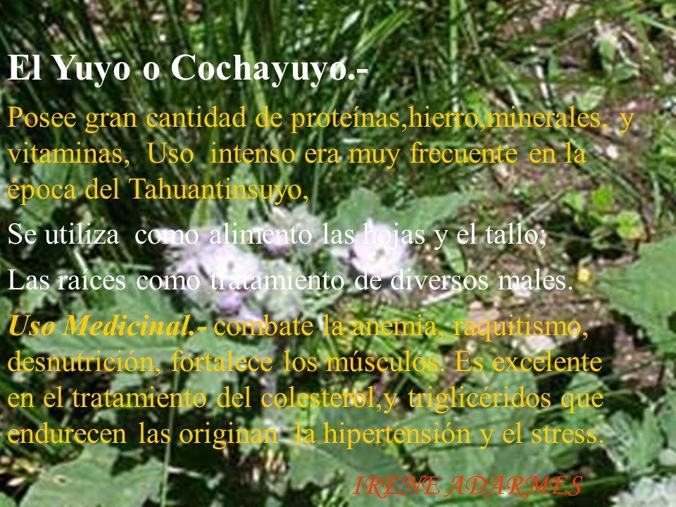 Los berros.- Es una planta de la familia de las crucíferas. Conocida y apreciada desde tiempos remotos, lo usaban nuestros Incas y en la actualidad su