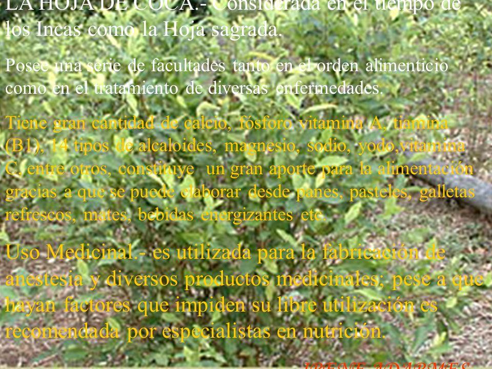 El Yuyo o Cochayuyo.- Posee gran cantidad de proteínas,hierro,minerales, y vitaminas, Uso intenso era muy frecuente en la época del Tahuantinsuyo, Se