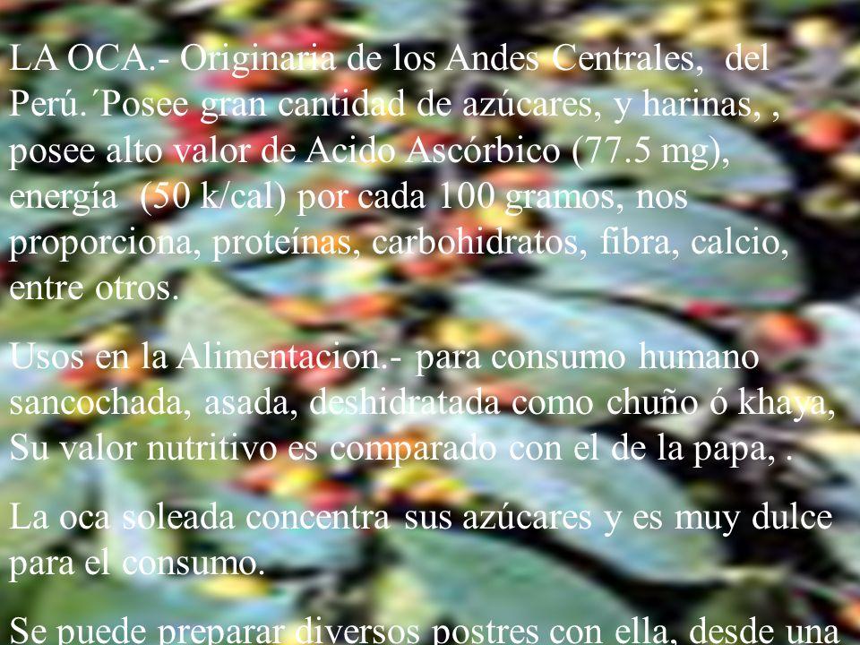 LA HOJA DE COCA.- Considerada en el tiempo de los Incas como la Hoja sagrada. Posee una serie de facultades tanto en el orden alimenticio como en el t