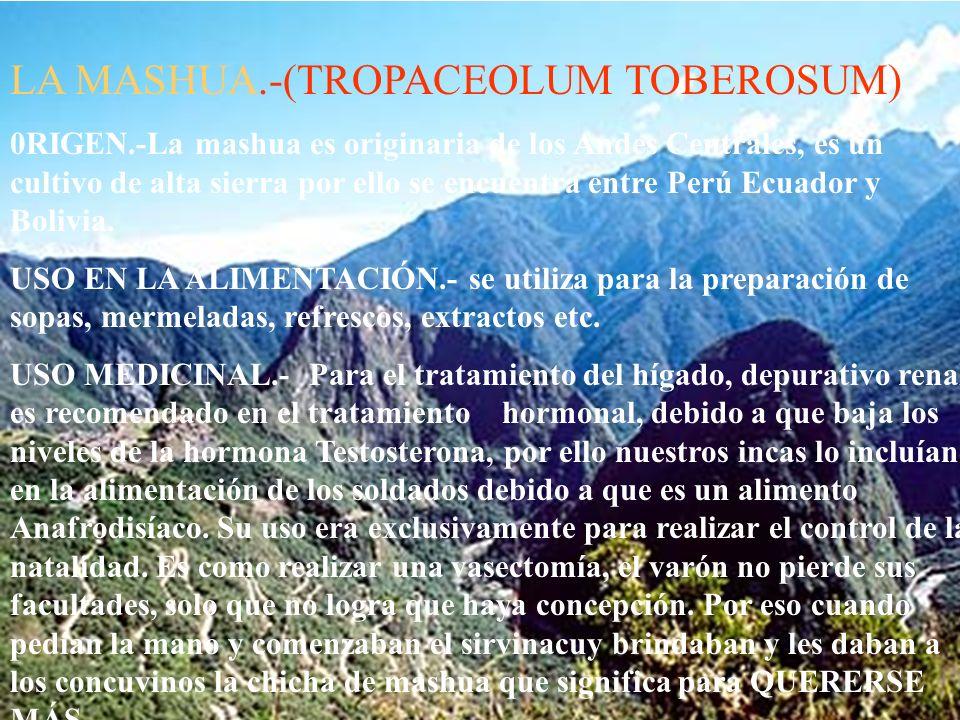 LA OCA.- Originaria de los Andes Centrales, del Perú.´Posee gran cantidad de azúcares, y harinas,, posee alto valor de Acido Ascórbico (77.5 mg), ener