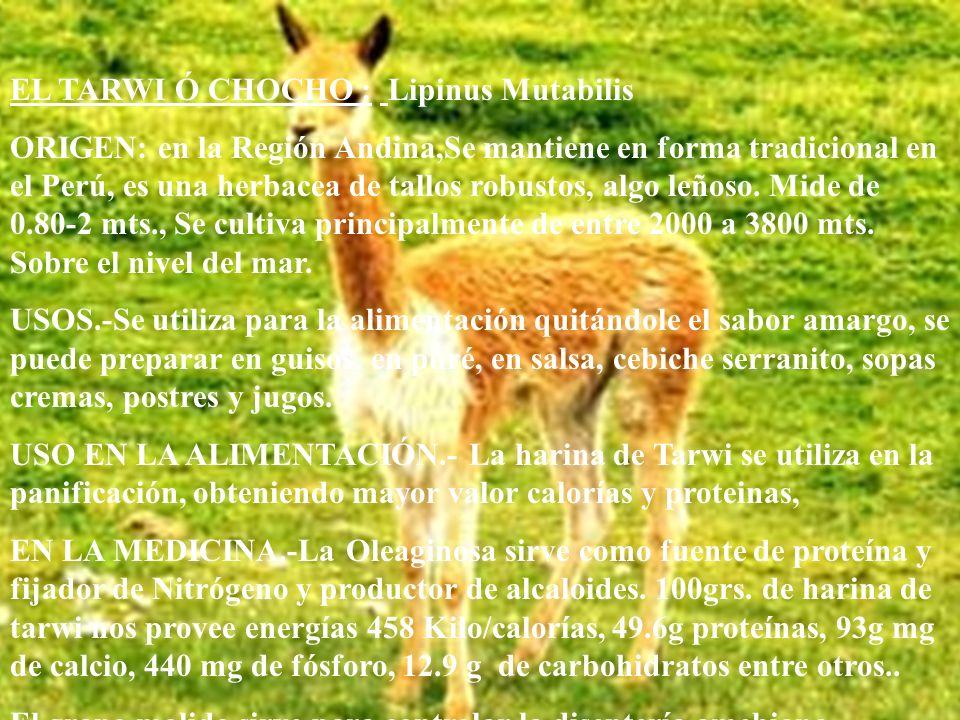 LA MASHUA.-(TROPACEOLUM TOBEROSUM) 0RIGEN.-La mashua es originaria de los Andes Centrales, es un cultivo de alta sierra por ello se encuentra entre Pe