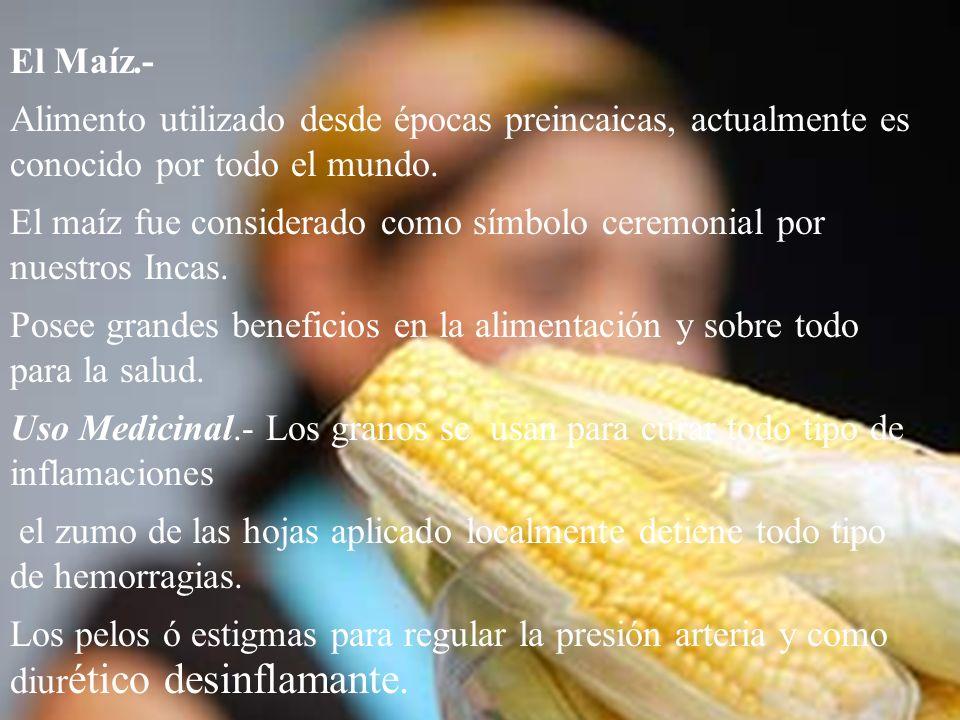 El Maíz.- Alimento utilizado desde épocas preincaicas, actualmente es conocido por todo el mundo.