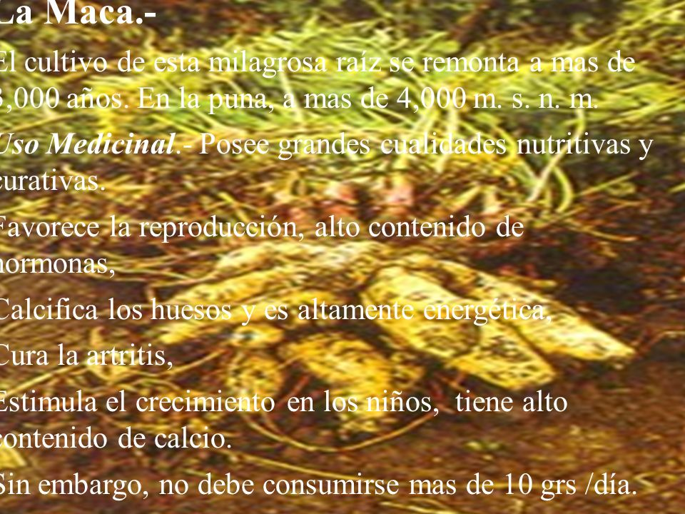 El Maíz.- Alimento utilizado desde épocas preincaicas, actualmente es conocido por todo el mundo. El maíz fue considerado como símbolo ceremonial por