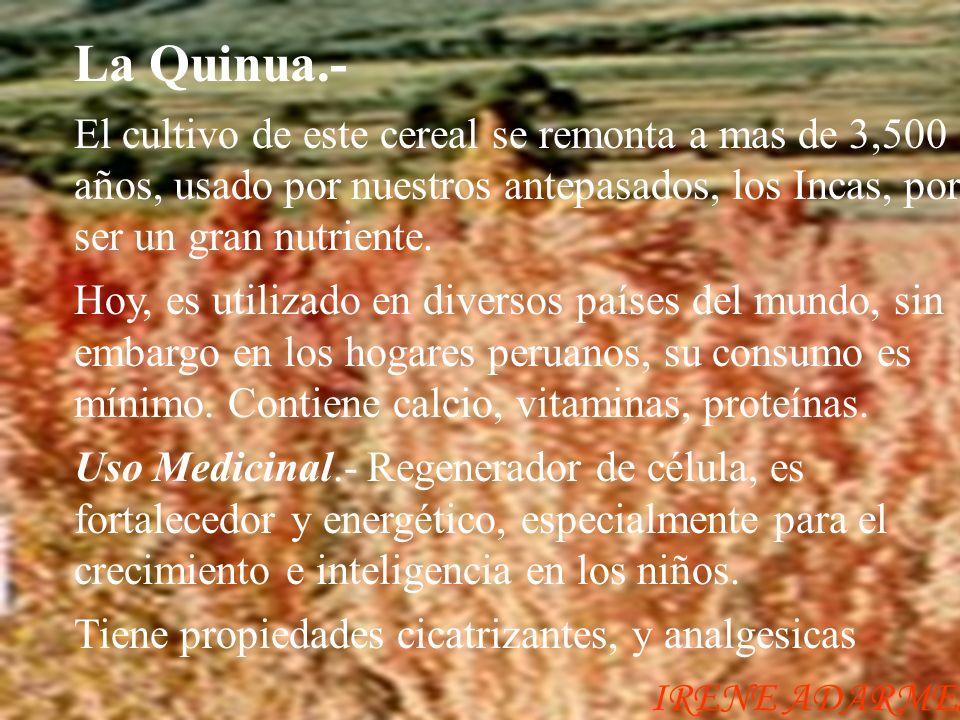 La Quinua.- El cultivo de este cereal se remonta a mas de 3,500 años, usado por nuestros antepasados, los Incas, por ser un gran nutriente.