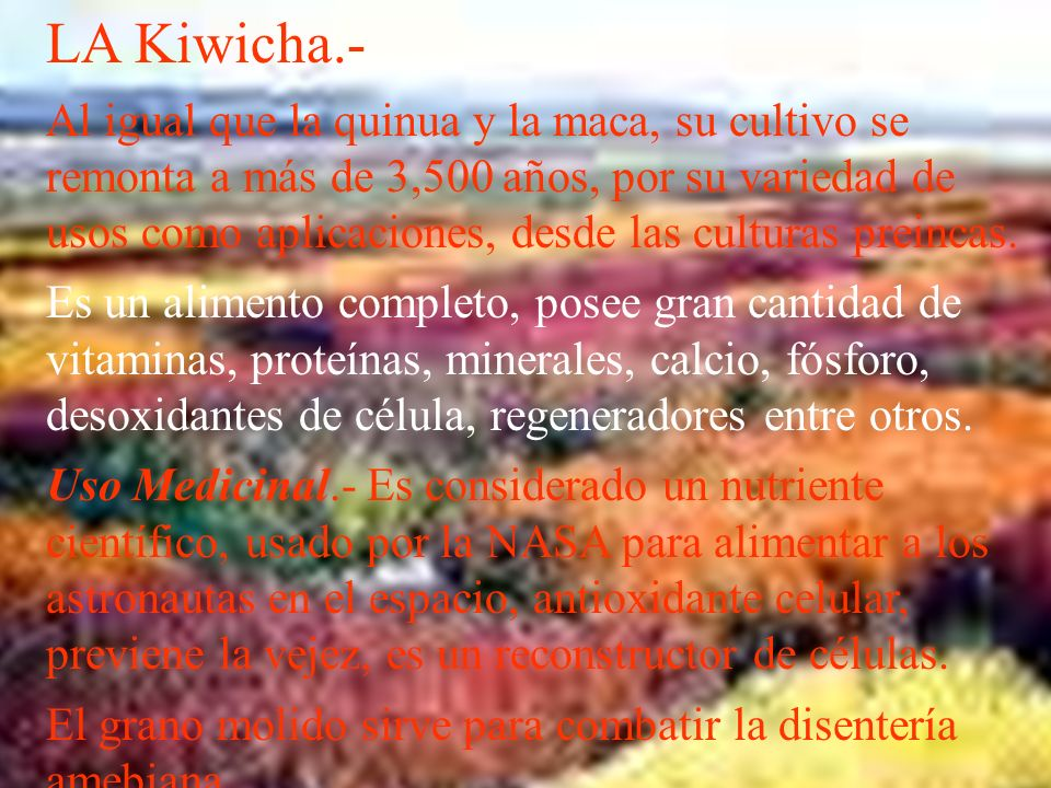 LA Kiwicha.- Al igual que la quinua y la maca, su cultivo se remonta a más de 3,500 años, por su variedad de usos como aplicaciones, desde las culturas preincas.