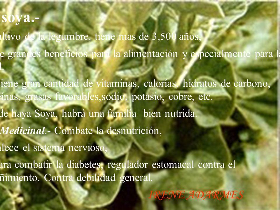 La soya.- El cultivo de la legumbre, tiene mas de 3,500 años, Posee grandes beneficios para la alimentación y especialmente para la salud.