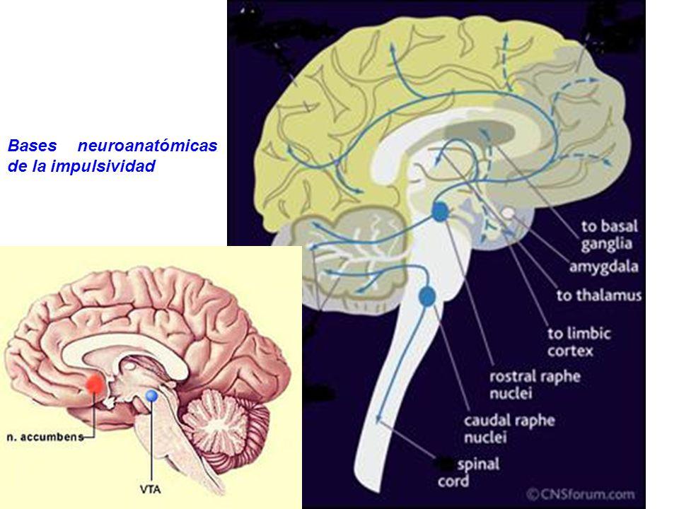 Hipótesis biológicas Inhibición/desinhibición conductual Reactividad al medio Falta de control ………………. Circuitos serotoninérgicos en el control de los