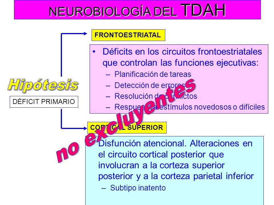 NEUROBIOLOGÍA DEL TDAH Corteza prefrontal FUNCIONAMIENTO EJECUTIVO –Inhibición de respuesta –Planeamiento comportamental –Atención selectiva –Organiza