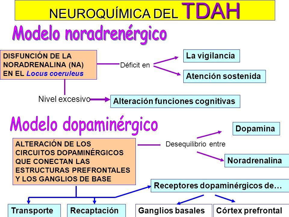 NEUROBIOLOGÍA DEL TDAH DÉFICIT PRIMARIO FRONTOESTRIATAL Déficits en los circuitos frontoestriatales que controlan las funciones ejecutivas: –Planifica