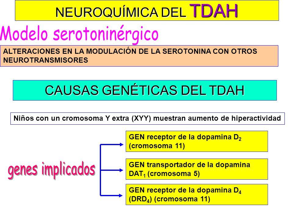 NEUROQUÍMICA DEL TDAH DISFUNCIÓN DE LA NORADRENALINA (NA) EN EL Locus coeruleus La vigilancia Atención sostenida Déficit en Alteración funciones cogni