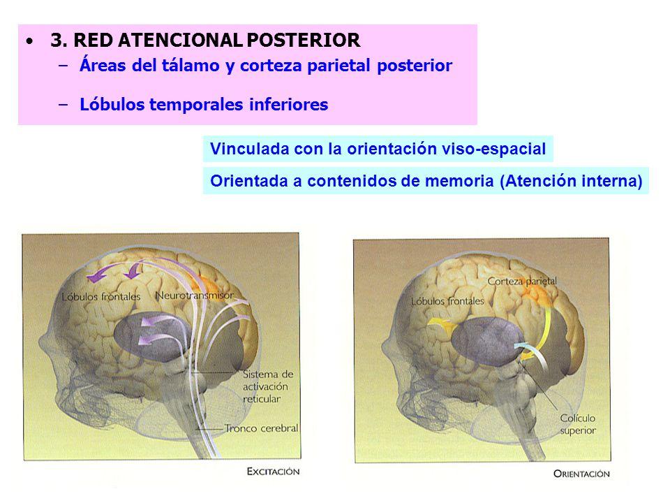 (Áreas V2 y V4 –núcleo pulvinar del tálamo) Memoria de trabajo Características estimulares Iniciación y la inhibición de respuesta 1. RED ATENCIONAL A