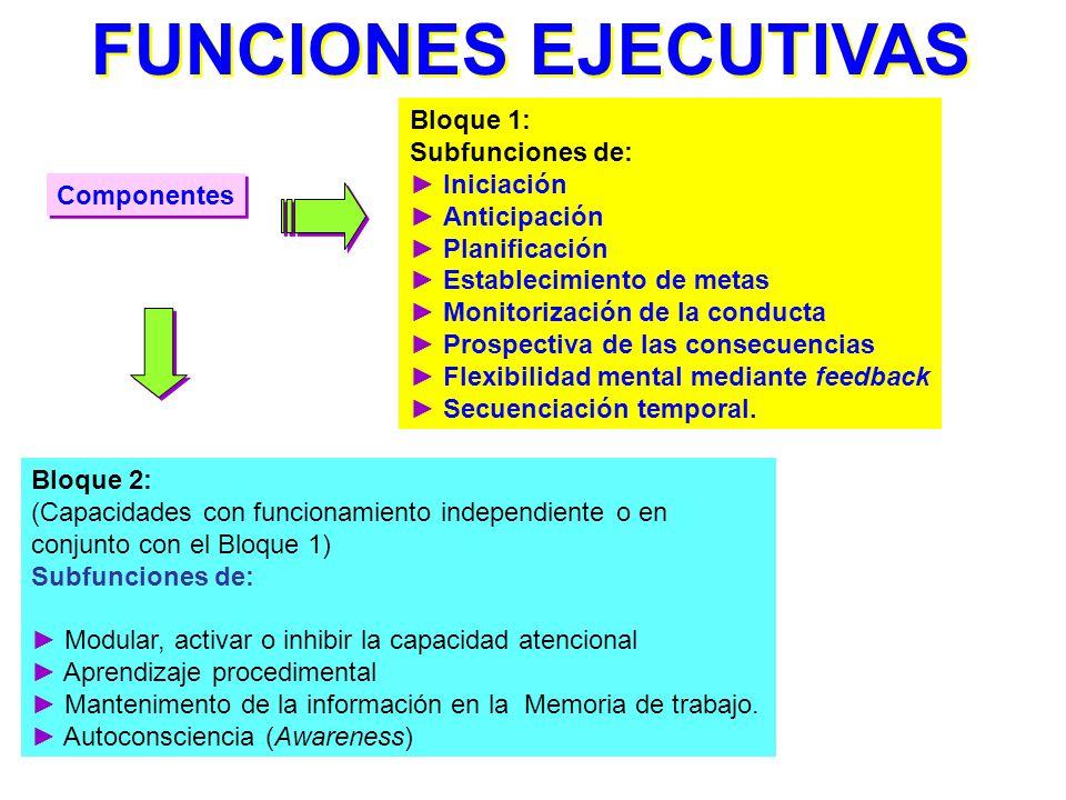 Neuroanatomía: Disfunciones en el lóbulo frontal (región prefrontal dorsolateral). Las funciones ejecutivas están ubicadas en las redes neuronales de