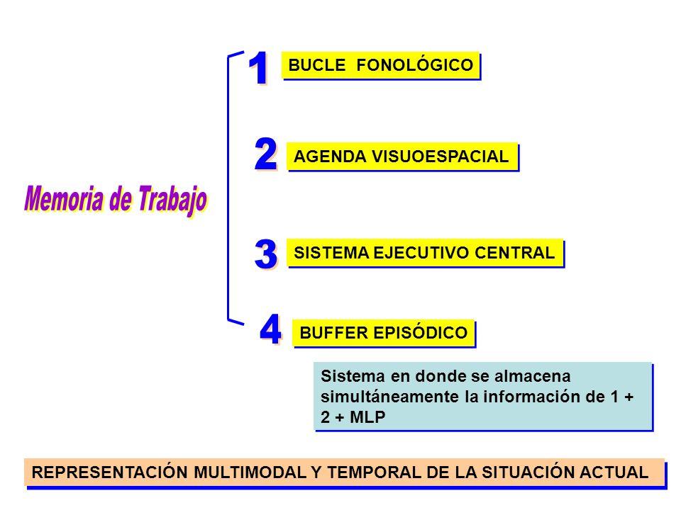 La Memoria de Trabajo Manipula la información necesaria para realizar los procesos cognitivos complejos de razonamiento (inferencial, deductivo, conse