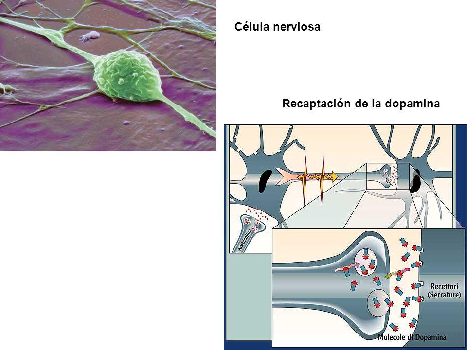 TRATAMIENTO FARMACOLÓGICO Mejorar los impulsos nerviosos en determinados circuitos frontoestriados, mediados por la dopamina o por la noradrenalina, q