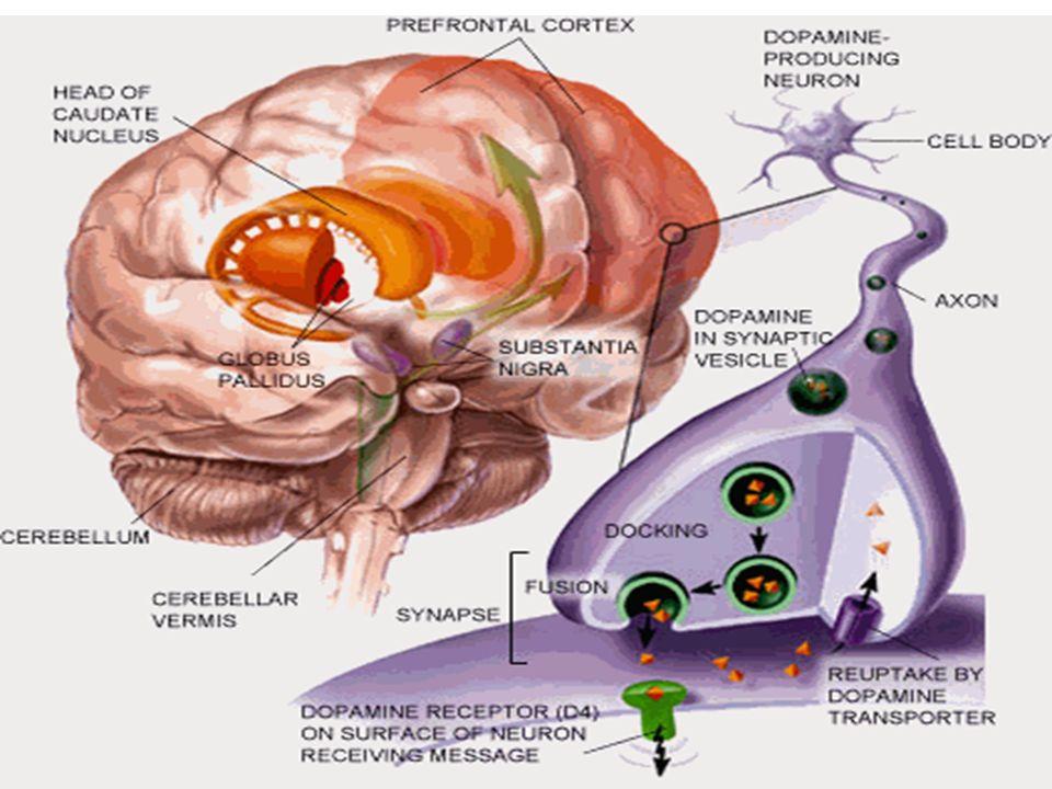 Célula nerviosa Recaptación de la dopamina