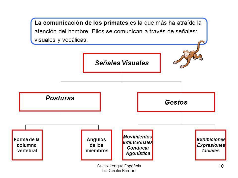 10 Curso: Lengua Española Lic. Cecilia Brenner Señales Visuales Posturas Gestos Forma de la columna vertebral Ángulos de los miembros Movimientos Inte