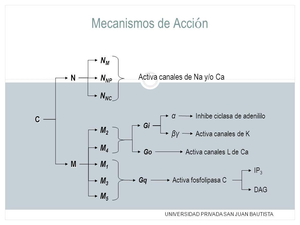 UNIVERSIDAD PRIVADA SAN JUAN BAUTISTA Mecanismos de Acci ó n C N M NMNM N NC N NP M3M3 M1M1 M4M4 M2M2 M5M5 Activa canales de Na y/o Ca Inhibe ciclasa