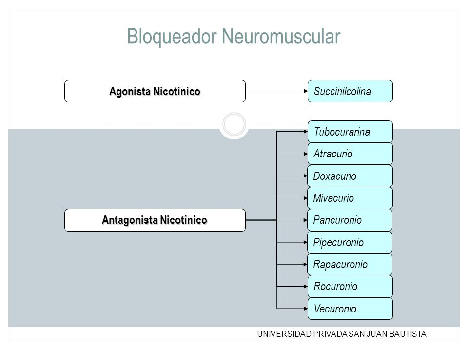 UNIVERSIDAD PRIVADA SAN JUAN BAUTISTA Bloqueador Neuromuscular Agonista Nicotínico Succinilcolina Tubocurarina Pancuronio Pipecuronio Vecuronio Antago