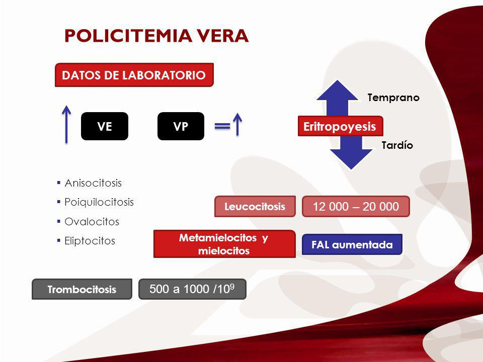 DATOS DE LABORATORIO VEVP Eritropoyesis Anisocitosis Poiquilocitosis Ovalocitos Eliptocitos Leucocitosis FAL aumentada Metamielocitos y mielocitos 12