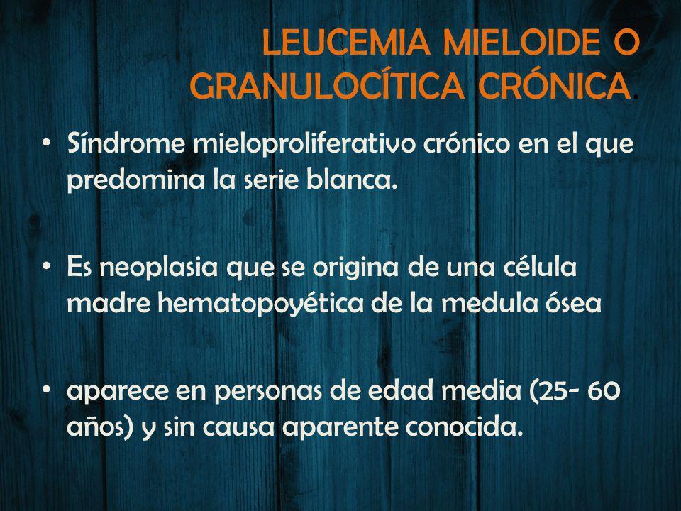 LEUCEMIA MIELOIDE O GRANULOCÍTICA CRÓNICA. Síndrome mieloproliferativo crónico en el que predomina la serie blanca. Es neoplasia que se origina de una