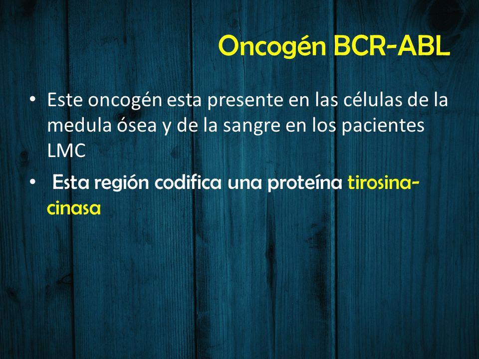 Oncogén BCR-ABL Este oncogén esta presente en las células de la medula ósea y de la sangre en los pacientes LMC Esta región codifica una proteína tiro