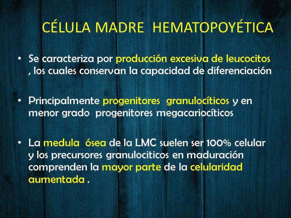 CÉLULA MADRE HEMATOPOYÉTICA Se caracteriza por producción excesiva de leucocitos, los cuales conservan la capacidad de diferenciación Principalmente p