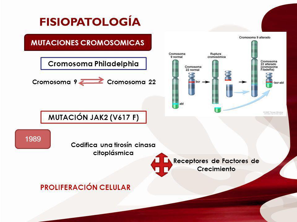 FISIOPATOLOGÍA MUTACIONES CROMOSOMICAS Cromosoma 9Cromosoma 22 Cromosoma Philadelphia MUTACIÓN JAK2 (V617 F) 1989 Codifica una tirosín cinasa citoplás
