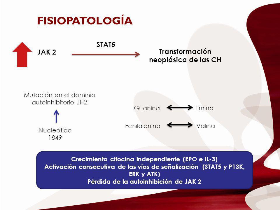 JAK 2 Transformación neoplásica de las CH STAT5 FISIOPATOLOGÍA Mutación en el dominio autoinhibitorio JH2 Nucleótido 1849 Guanina Timina Fenilalanina