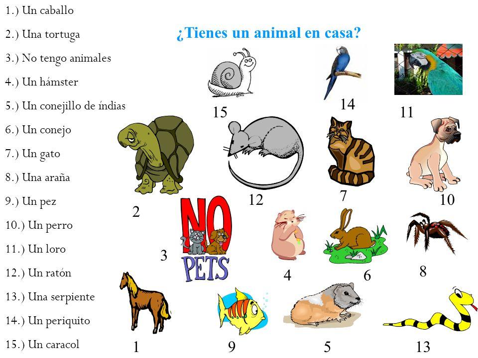 ¿Tienes un animal en casa? 1.) Un caballo 2.) Una tortuga 3.) No tengo animales 4.) Un hámster 5.) Un conejillo de índias 6.) Un conejo 7.) Un gato 8.