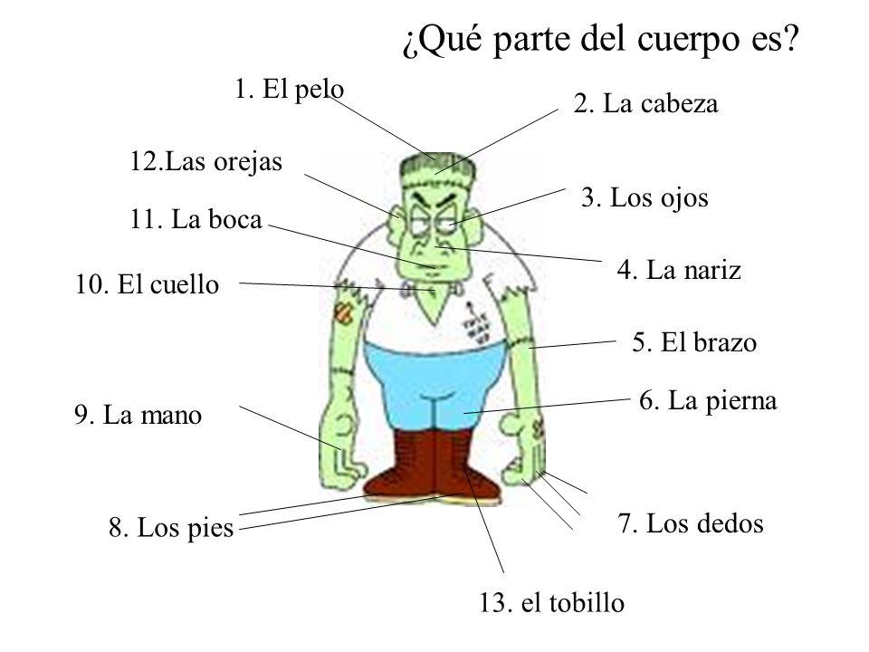¿Qué parte del cuerpo es? 2. La cabeza 1. El pelo 12.Las orejas 3. Los ojos 4. La nariz 11. La boca 10. El cuello 5. El brazo 9. La mano 6. La pierna