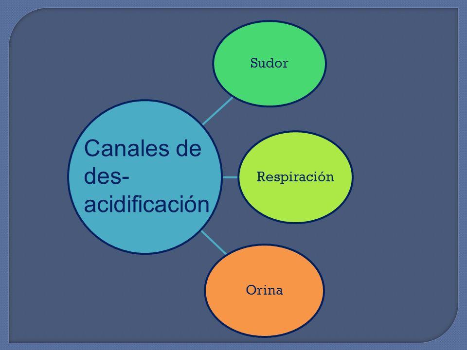 Sudor RespiraciónOrina Canales de des- acidificación