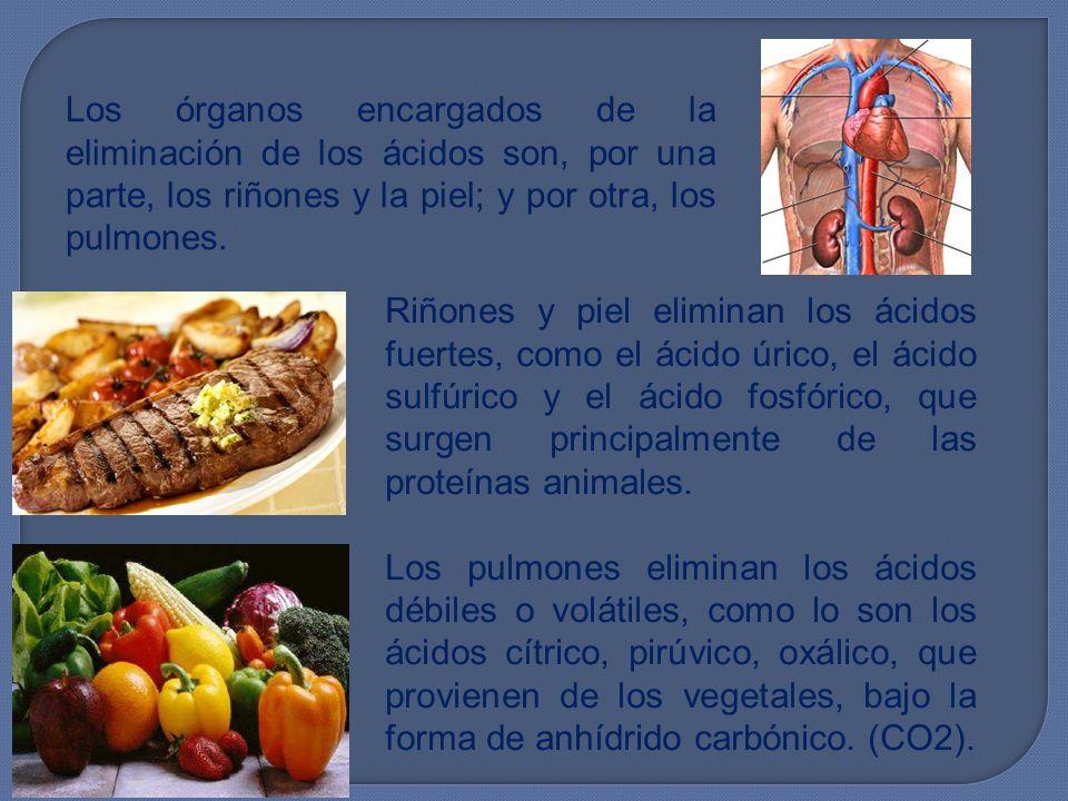 Los órganos encargados de la eliminación de los ácidos son, por una parte, los riñones y la piel; y por otra, los pulmones. Riñones y piel eliminan lo