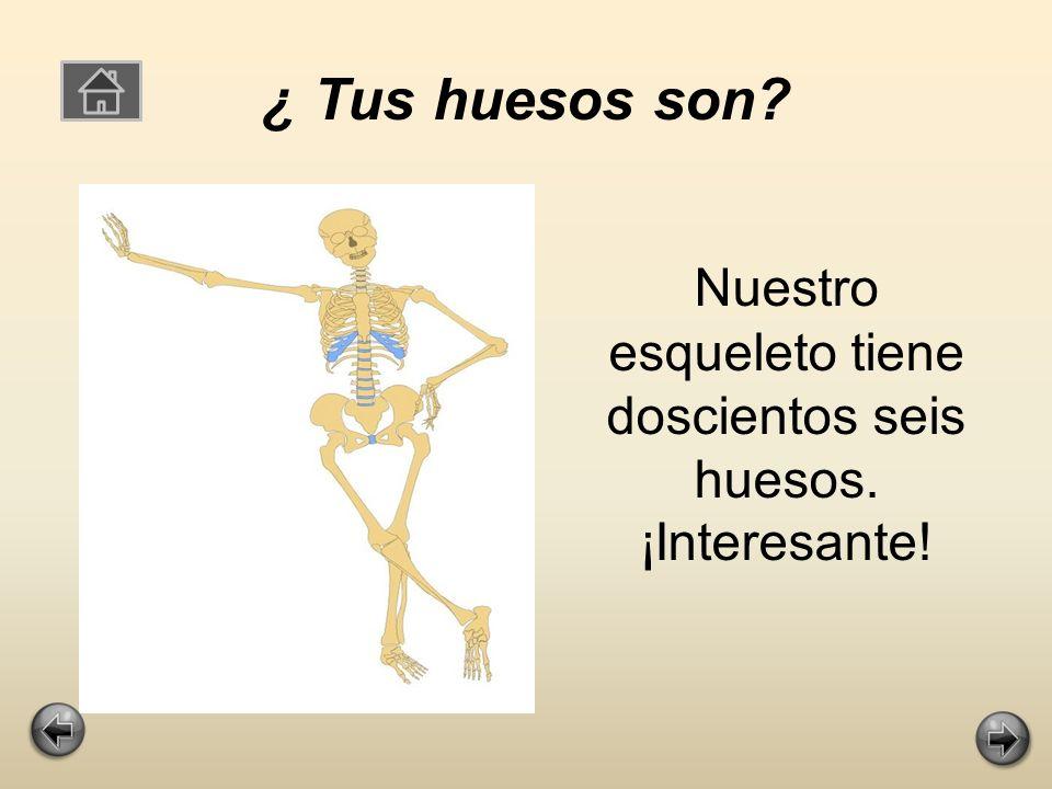 ¿ Cuantos huesos tienes? Nuestro esqueleto tiene doscientos seis huesos.
