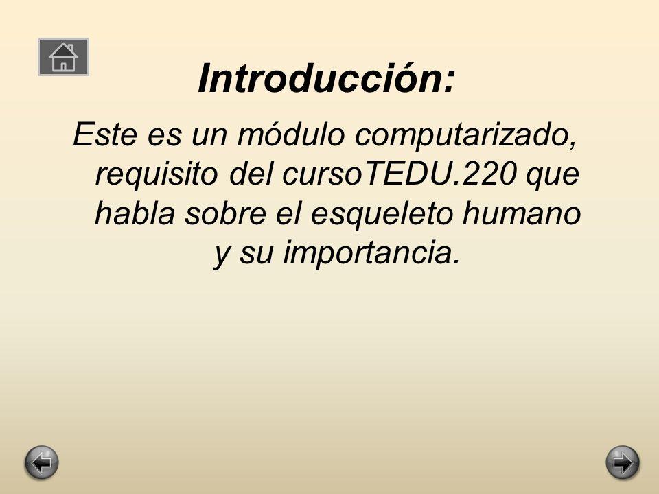 El Esqueleto humano Preparado Por: Vivianette Marrero Ramos Noviembre 2009 Tedu.