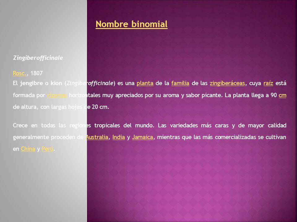 Nombre binomial Zingiberofficinale Rosc.Rosc., 1807 El jengibre o kion (Zingiberofficinale) es una planta de la familia de las zingiberáceas, cuya raí