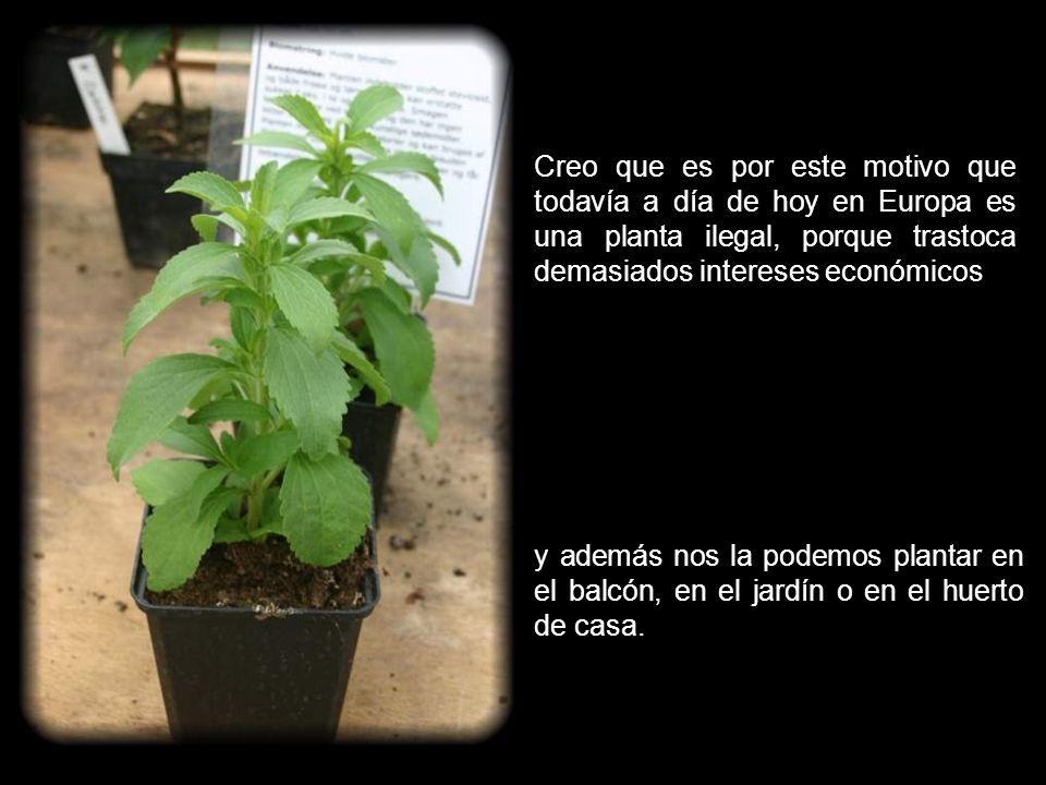 Parece imposible que en una sola planta se puedan encontrar tantas propiedades.