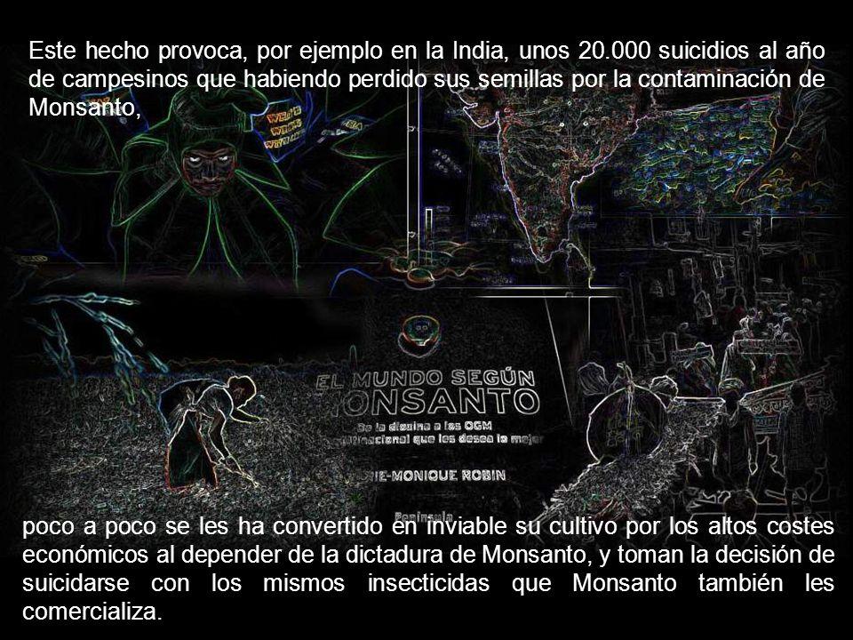 Esta multinacional, además de criminalizar a la Stevia para evitar la competencia con el Aspartamo, producía y produce semillas transgénicas, mediante