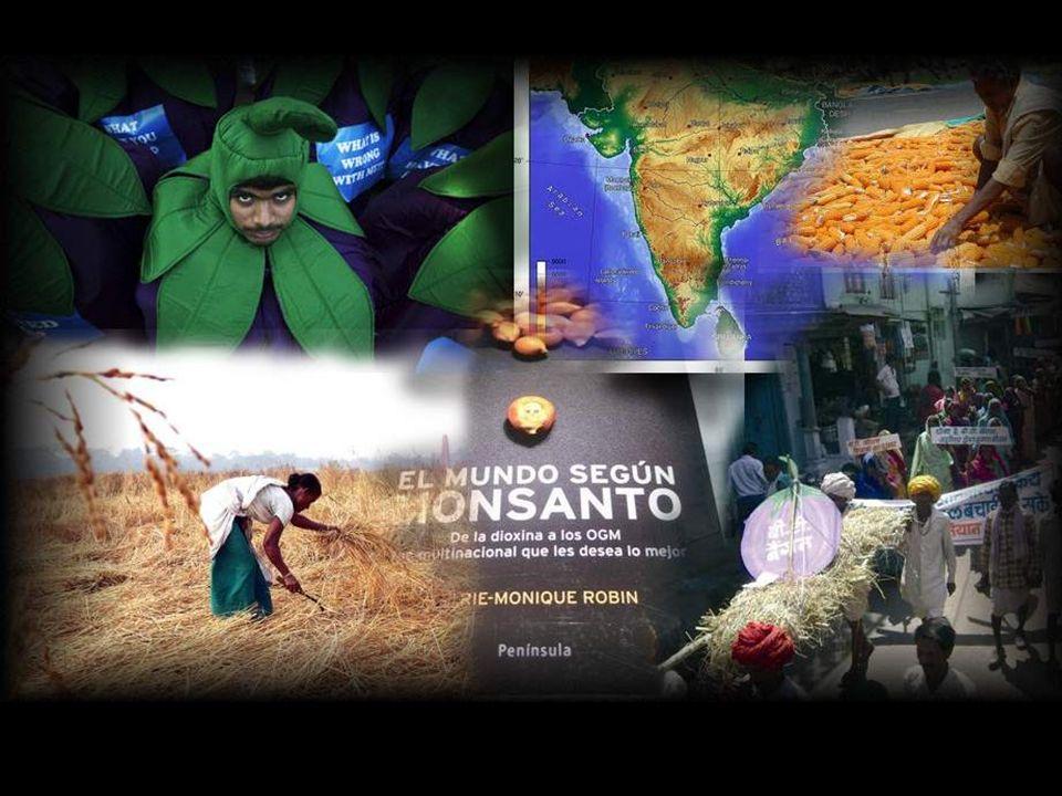 Este hecho provoca, por ejemplo en la India, unos 20.000 suicidios al año de campesinos que habiendo perdido sus semillas por la contaminación de Mons