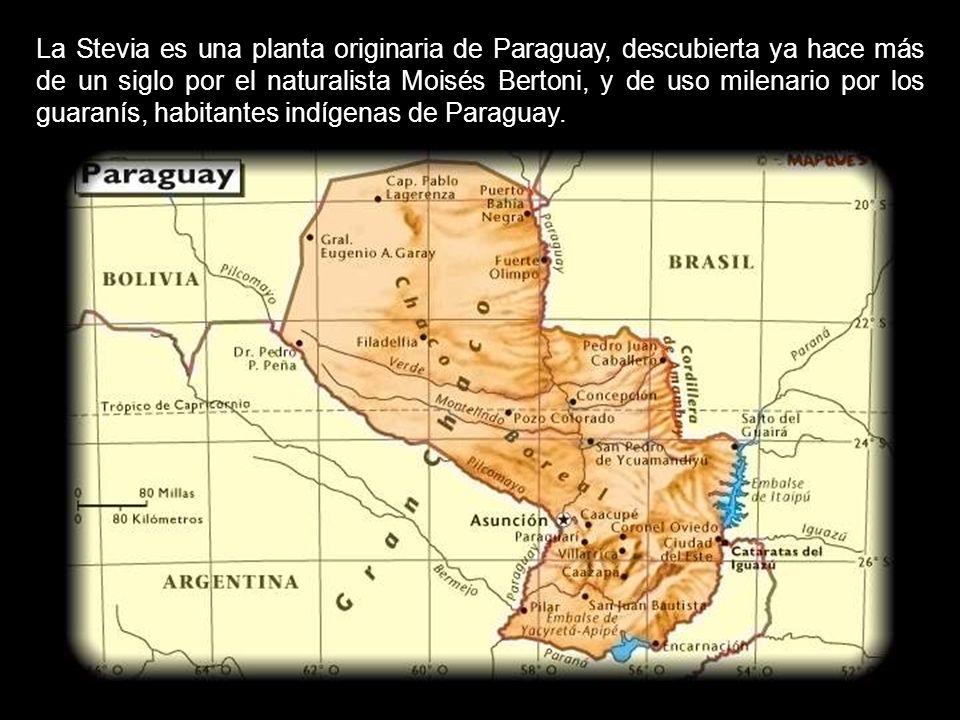 JOSEP PAMIES. EL PAYES DE LA STEVIA