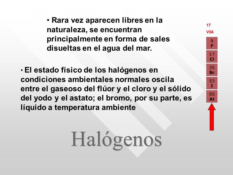 Halógenos Rara vez aparecen libres en la naturaleza, se encuentran principalmente en forma de sales disueltas en el agua del mar.