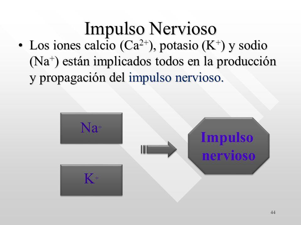 Impulso Nervioso Los iones calcio (Ca 2+ ), potasio (K + ) y sodio (Na + ) están implicados todos en la producción y propagación del impulso nervioso.Los iones calcio (Ca 2+ ), potasio (K + ) y sodio (Na + ) están implicados todos en la producción y propagación del impulso nervioso.