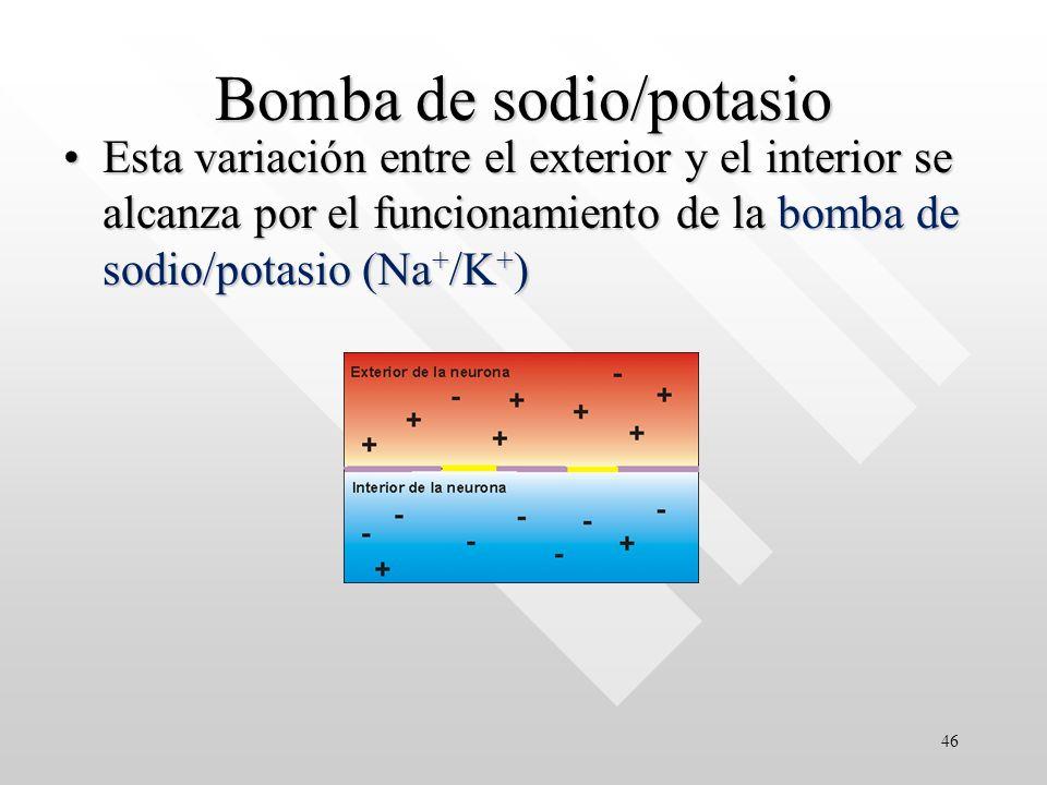 Bomba de sodio/potasio Esta variación entre el exterior y el interior se alcanza por el funcionamiento de la bomba de sodio/potasio (Na + /K + )Esta variación entre el exterior y el interior se alcanza por el funcionamiento de la bomba de sodio/potasio (Na + /K + ) 46