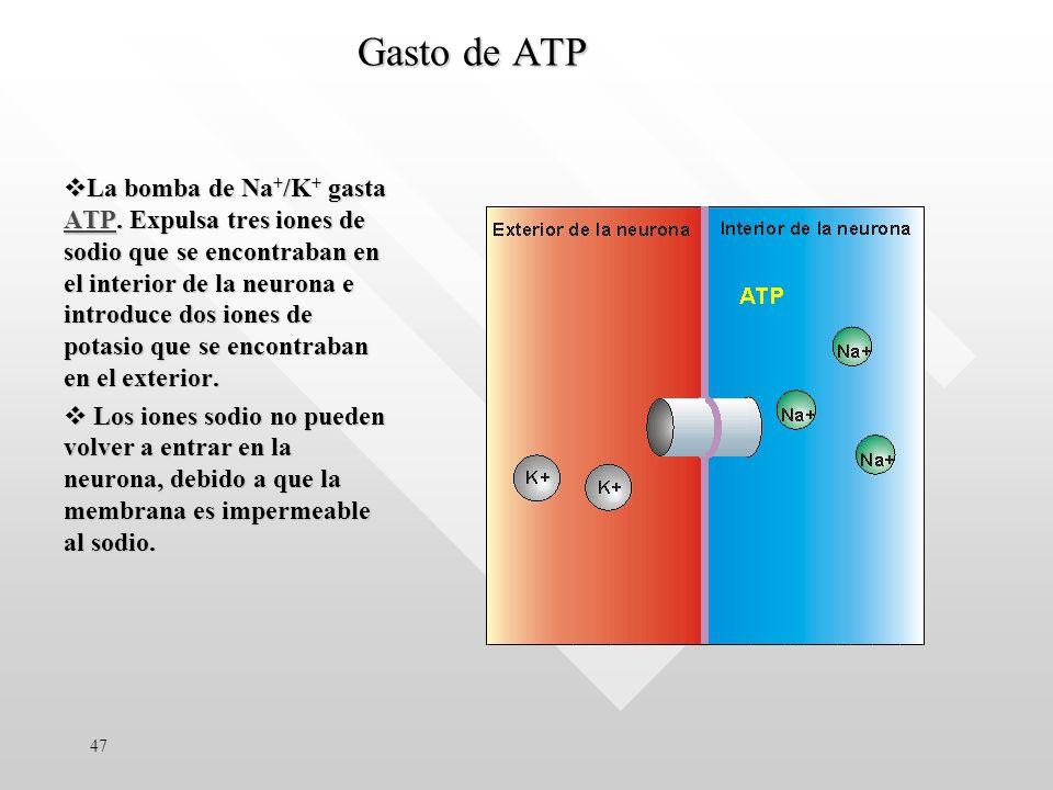 La bomba de Na + /K + gasta ATP.
