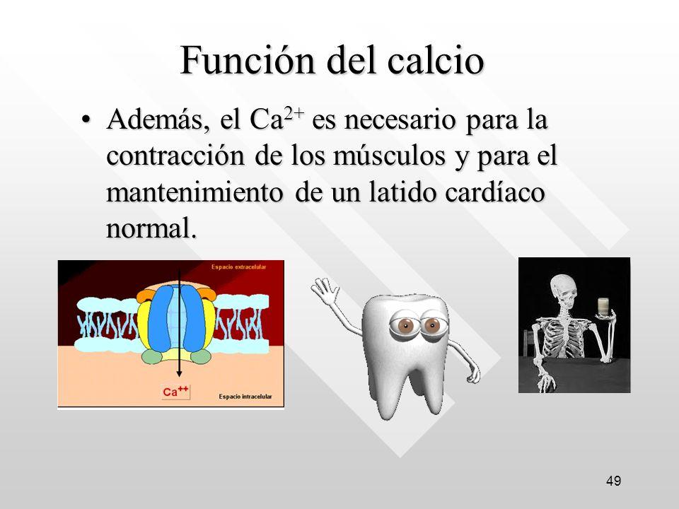 Función del calcio Además, el Ca 2+ es necesario para la contracción de los músculos y para el mantenimiento de un latido cardíaco normal.Además, el Ca 2+ es necesario para la contracción de los músculos y para el mantenimiento de un latido cardíaco normal.