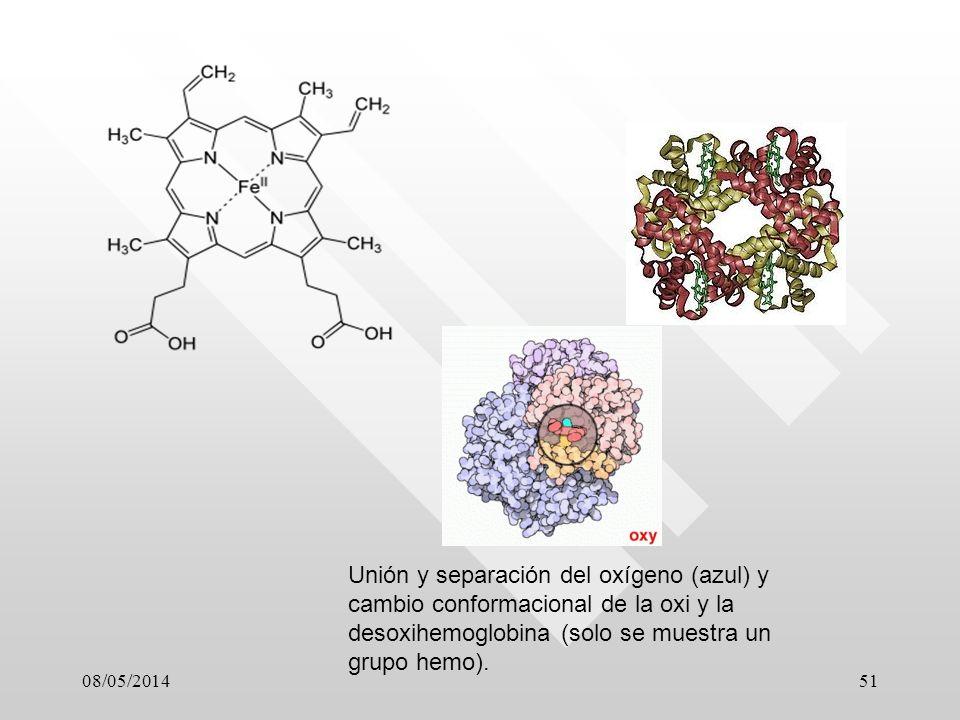08/05/201451 Unión y separación del oxígeno (azul) y cambio conformacional de la oxi y la desoxihemoglobina (solo se muestra un grupo hemo).