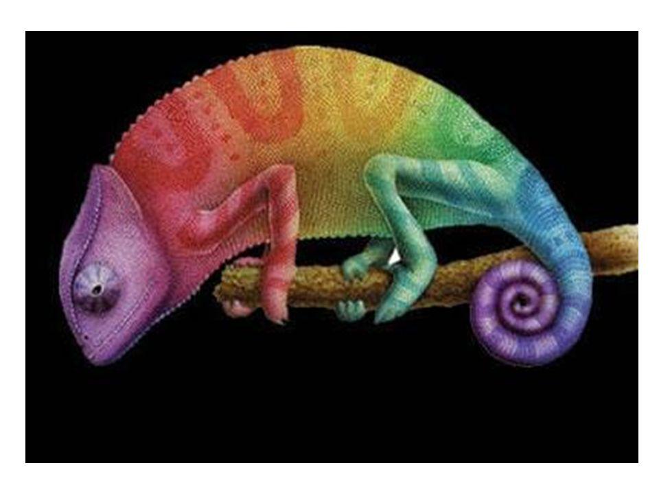 5.- ¿Por qué el camaleón cambia de color?