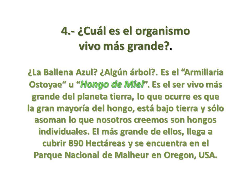 4.- ¿Cuál es el organismo vivo más grande?.