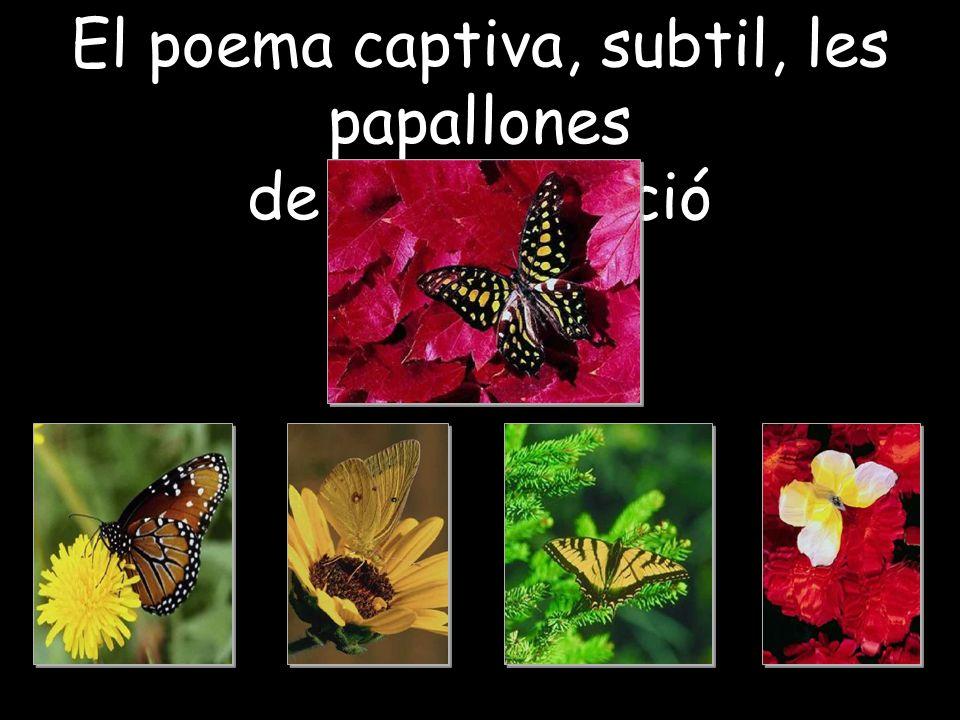 El poema captiva, subtil, les papallones de la imaginació