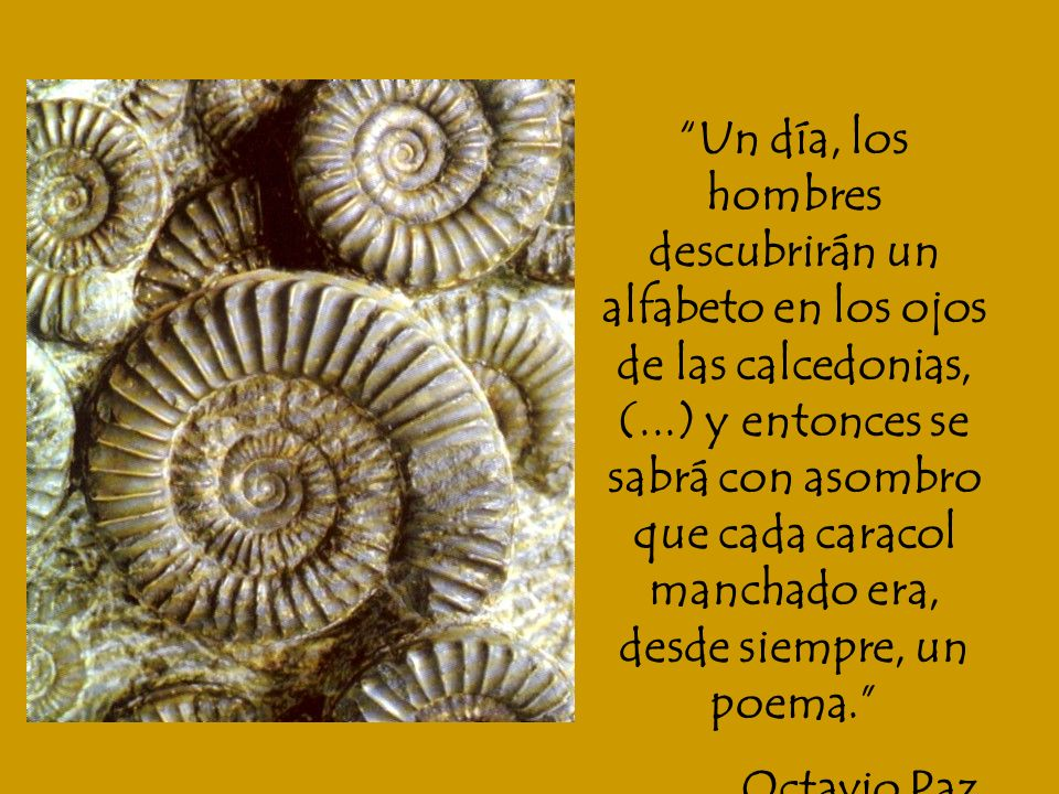 Un día, los hombres descubrirán un alfabeto en los ojos de las calcedonias, (...) y entonces se sabrá con asombro que cada caracol manchado era, desde siempre, un poema.